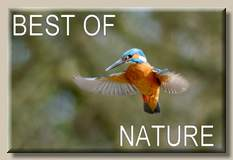 Best of nature